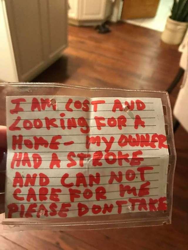 6-месячного щенка оставил хозяин… Но судя по записке на его шее человек очень о нем беспокоится