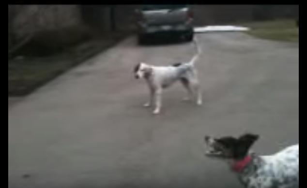 Актерская игра пса на игривы…