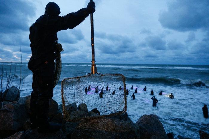 Сбор «солнечного камня» после «янтарной бури» на побережье Балтийского моря. Автор фотографии: Виталий Невар.