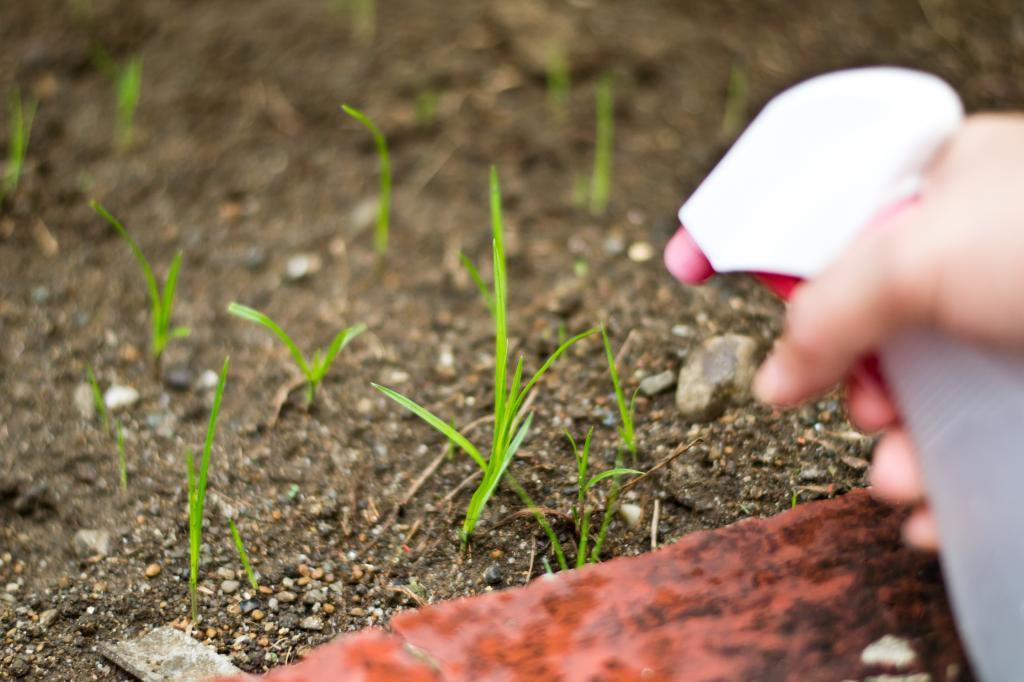 Эффективные способы устранения сорняков с дачных тропинок навсегда