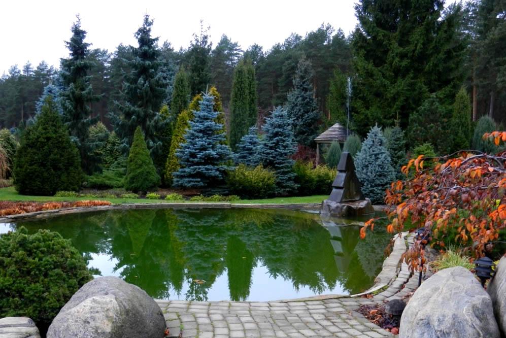 Примеры хвойных садов