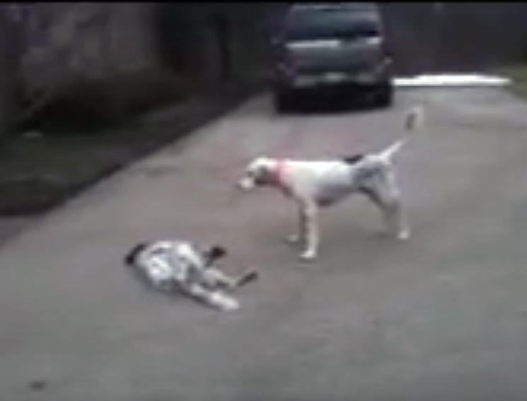 Играя, один пес укусил второ…
