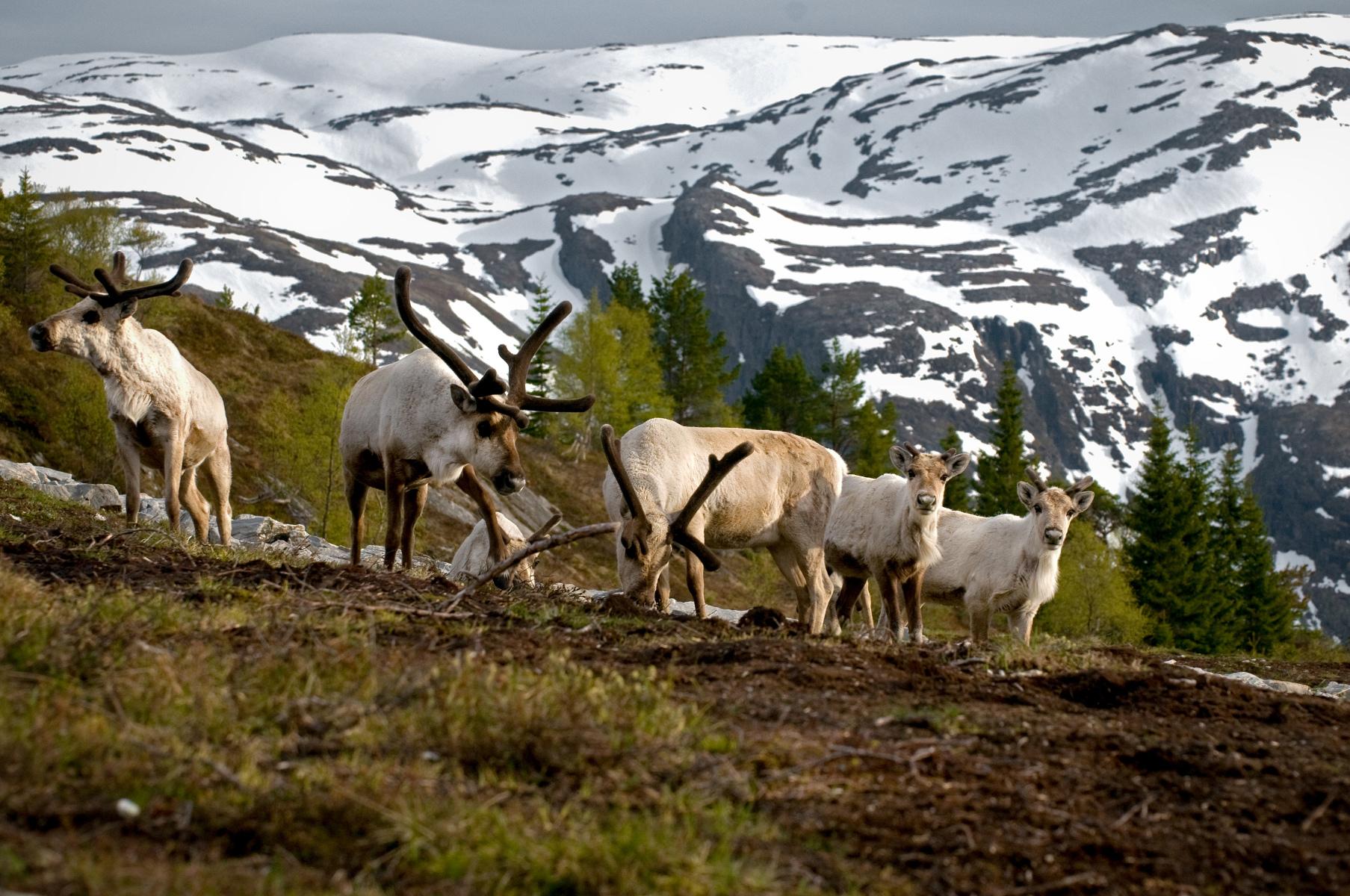 Суд Норвегии поддержал коренные народы и запретил ветряные электростанции