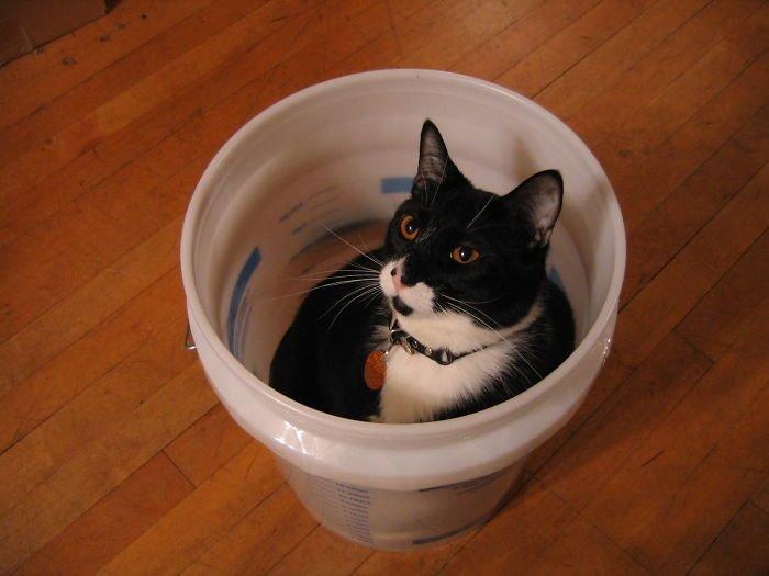 Я - кот, мне можно животные, кот, коты, кошки, приколы с животными, смешно, фото, юмор