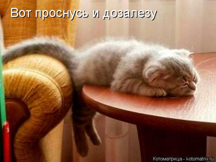 Вот проснусь и дозалезу...  Забавные котоматрицы