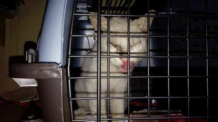 Обезображенного кота посчитали слепым, но он открыл свои потрясающие глазки до и после, животные, истории, история спасения, коты, кошки, трогательно