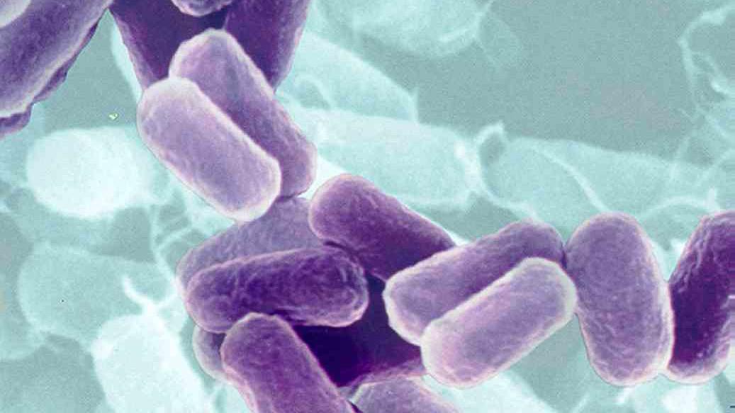 10 самых смертоносных болезней в человеческой истории болезни,медицина,эпидемии