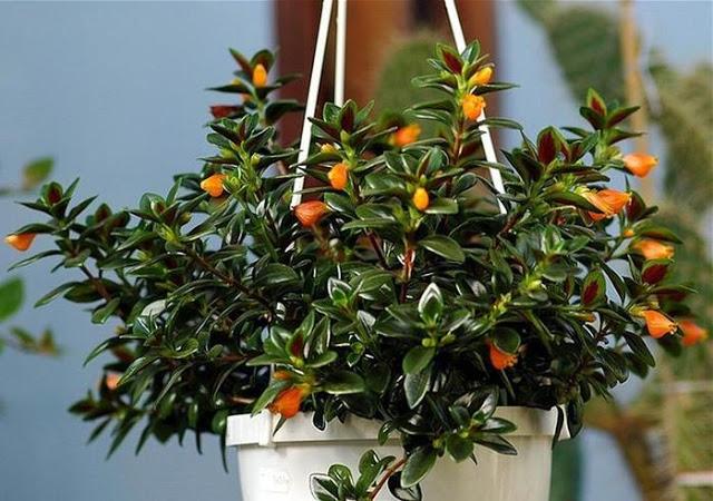 Самые необычные комнатные растения,которые вам могут понравиться
