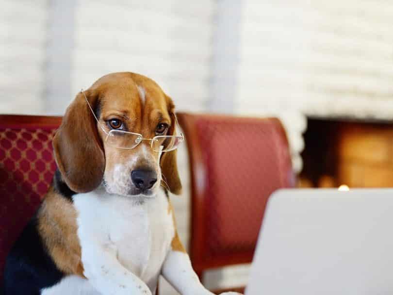 Новое изобретение: ученые придумали устройство, которое интерпретирует мозговую активность собак в речь