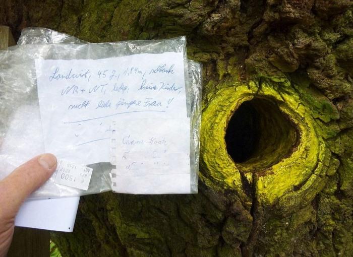 Самый романтичный дуб в мире