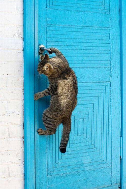 Днем сельского, веселые картинки про двери