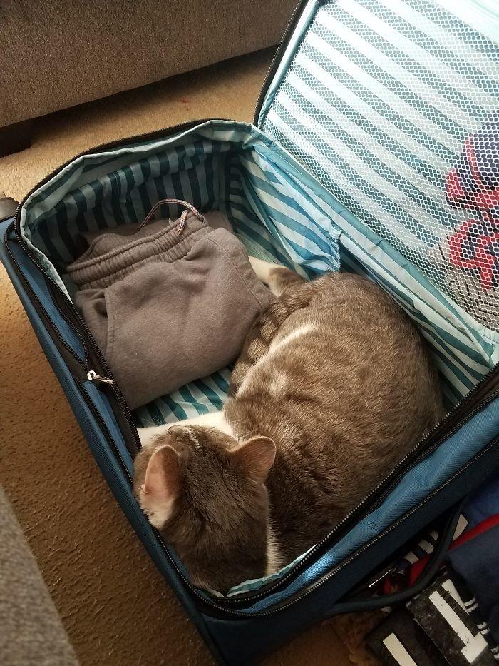 В этом все коты животные, кот, коты, кошки, приколы с животными, смешно, фото, юмор