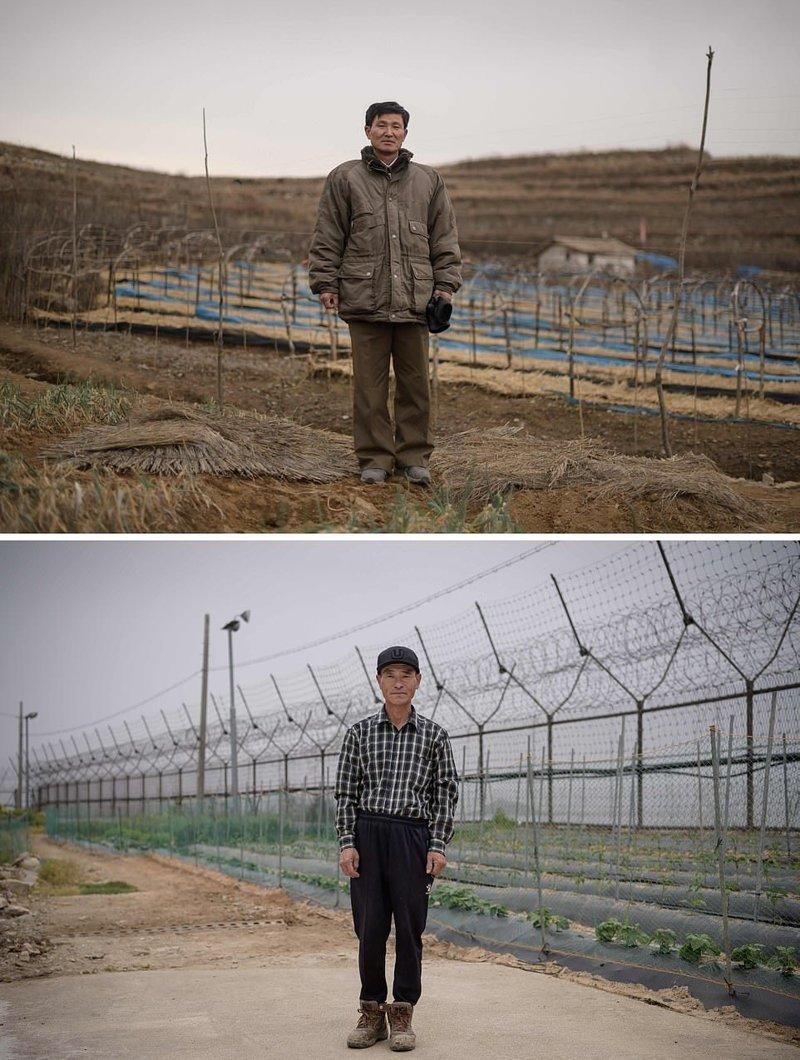 Вверху — фермер на фоне поля женьшеня, северокорейский город Кэсон. Внизу — также фермер стоит на своем поле, которое находится около забора демилитаризованной зоны — границы между Северной и Южной Кореей кндр, люди, северная корея, сравнение, страны, южная корея