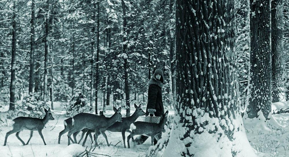 «Ведьма» из Беловежской пущи Симона Коссак животные