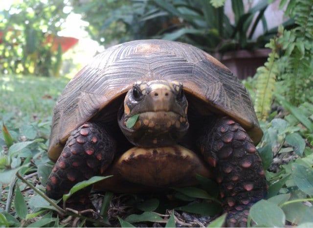 Черепаха ушла из дома на 3 недели. Хозяин был очень удивлен, узнав, где она была истории из жизни