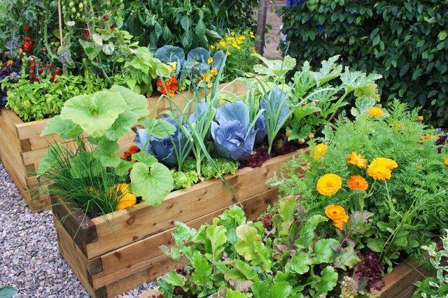 Овощи вперемешку с цветами