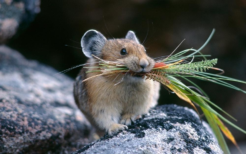 """На даче завелась мышь и я, как мужчина, должен """"поймать эту дрянь, пока она не съела нашу дачу"""""""
