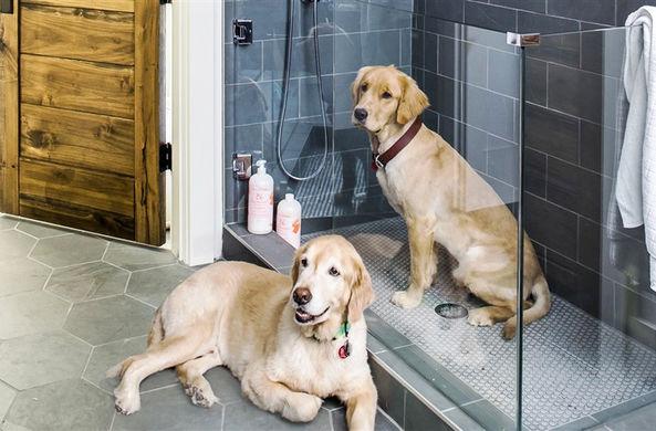 Душевые для собак — новый тр…