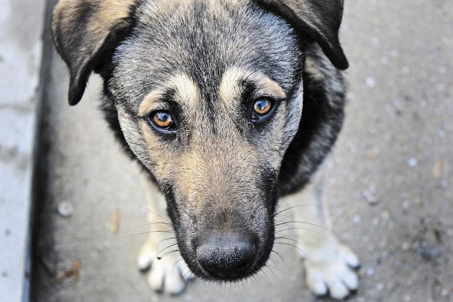 Неравнодушные новосибирцы спасли найденную в мешке собаку