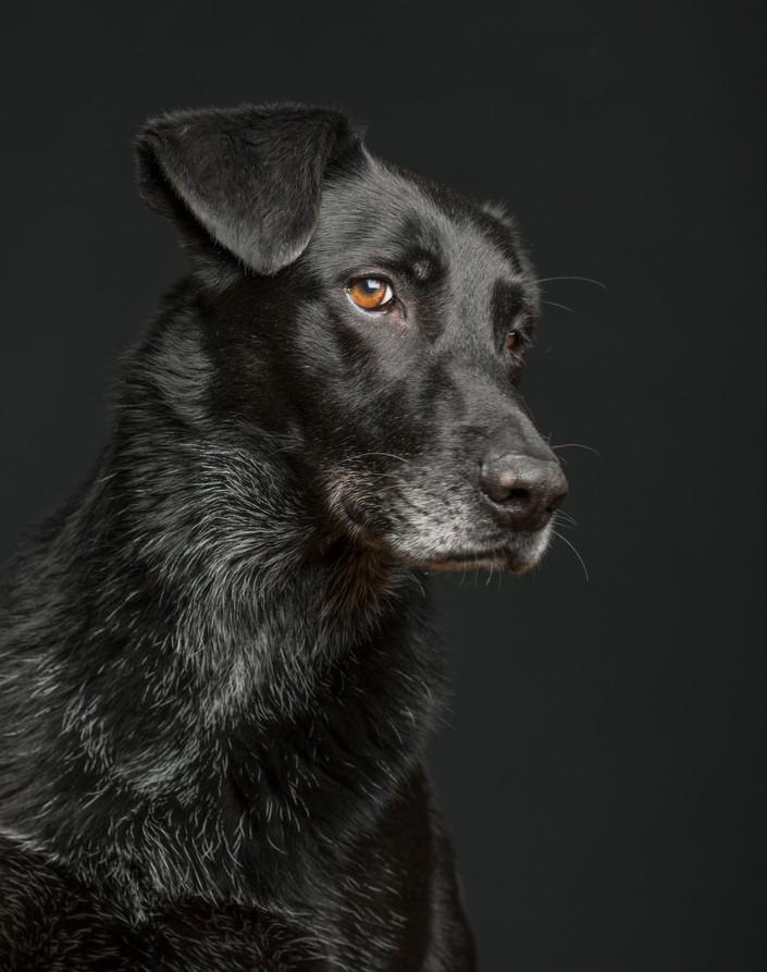 О чем думает ваша собака