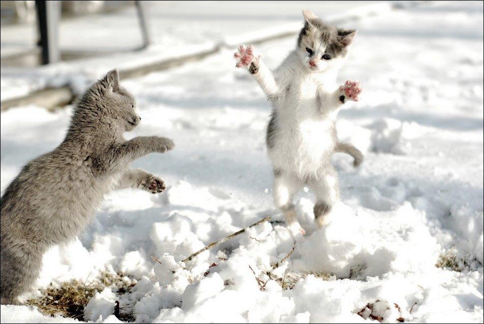 девкшкой-консультантом составили картинки красивые прикольные конец зимы пуанты традиционные, следует