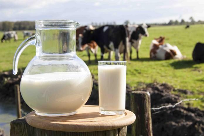 Неприятные факты о молоке, которые нужно знать каждому