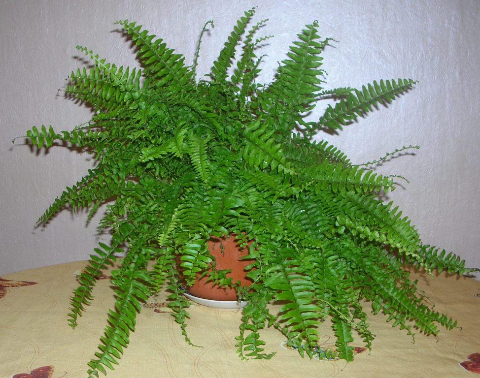Растения, которые могут расти в комнатах без света