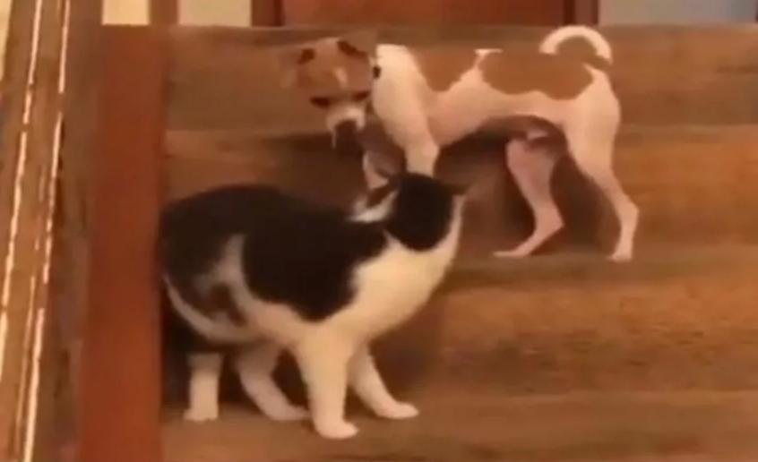 Сам того не ожидая, кот активировал у собаки турбо режим