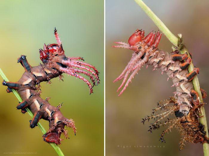 Необычные гусеницы в фотогра…