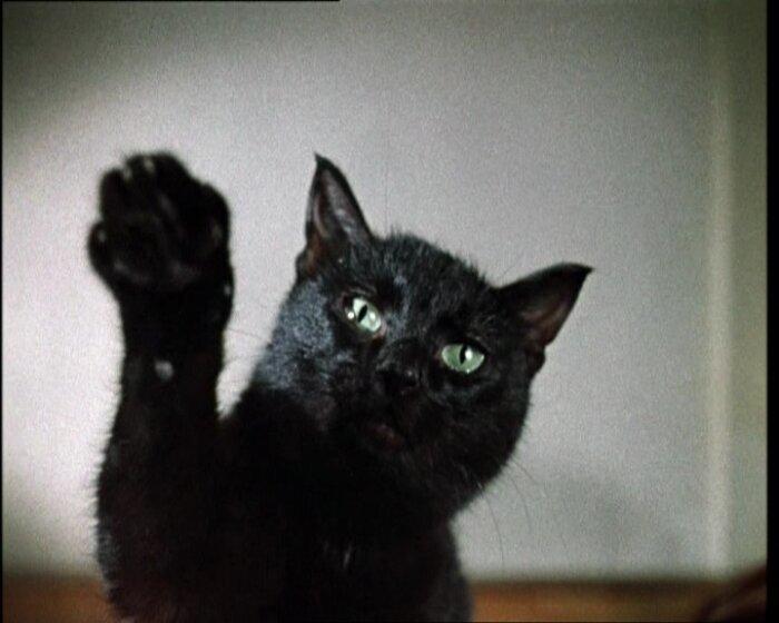 Черные коты Гайдая животные, кино, это интересно