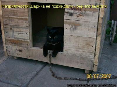 Как делили котят...