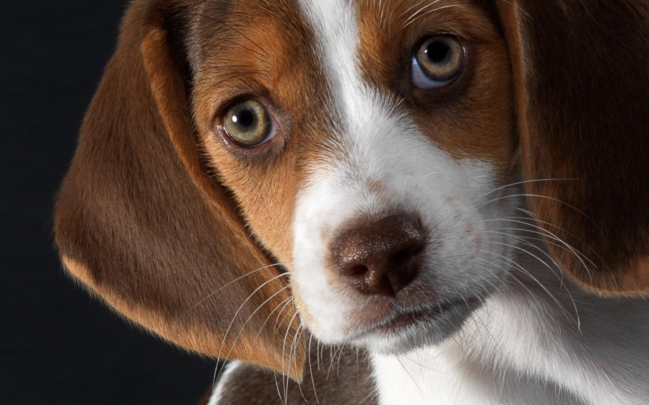 правила покупки породистой собаки