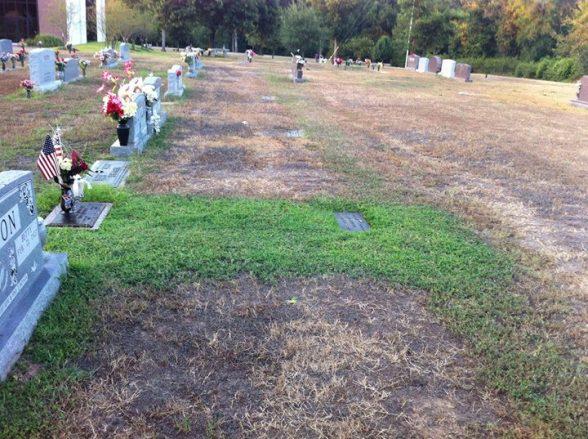 Родители не могли понять, почему трава на могиле их сына остается зеленой