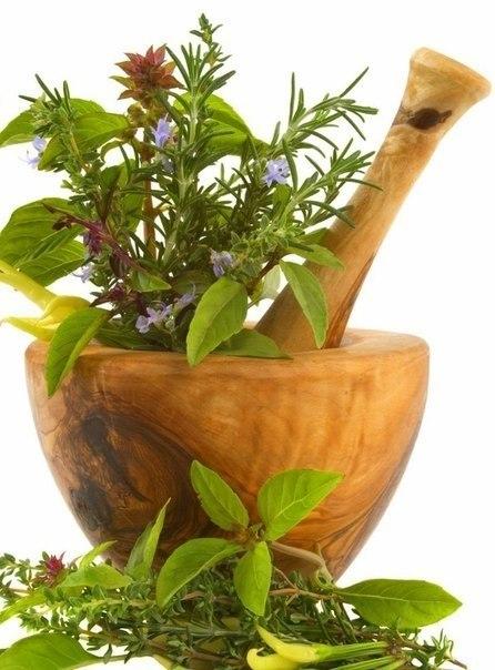 ЗДРАВОТДЕЛ. Седативные средства растительного происхождения