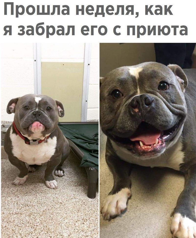 Картинки против, фото собак с надписями смешные до слез