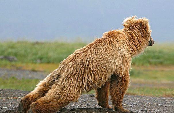 Эти 25 животных научат вас, как заниматься йогой животные,интересное,йога,позитив