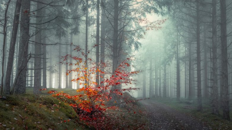 Мистические леса, от одного вида которых захватывает дух