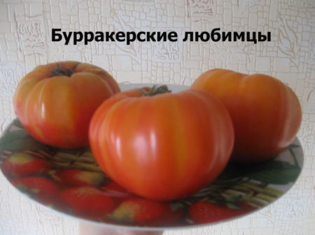 Характеристика и описание томата «Бурракерские любимцы»