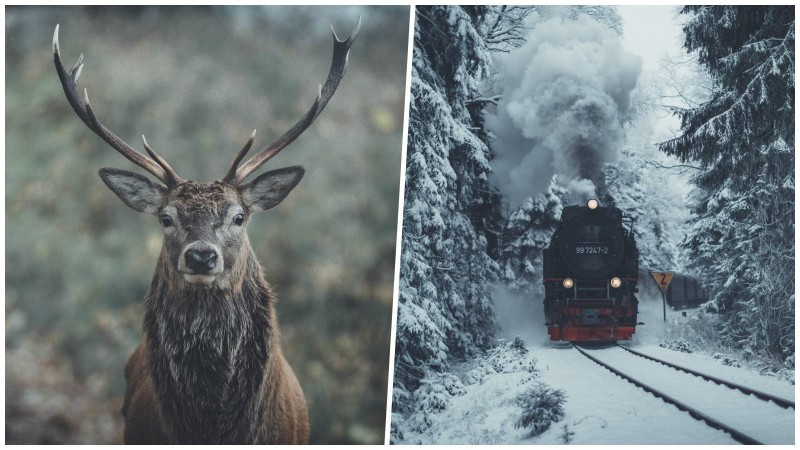 Каждое фото — как живописное полотно: бельгиец создает выразительные пейзажи Северной Европы