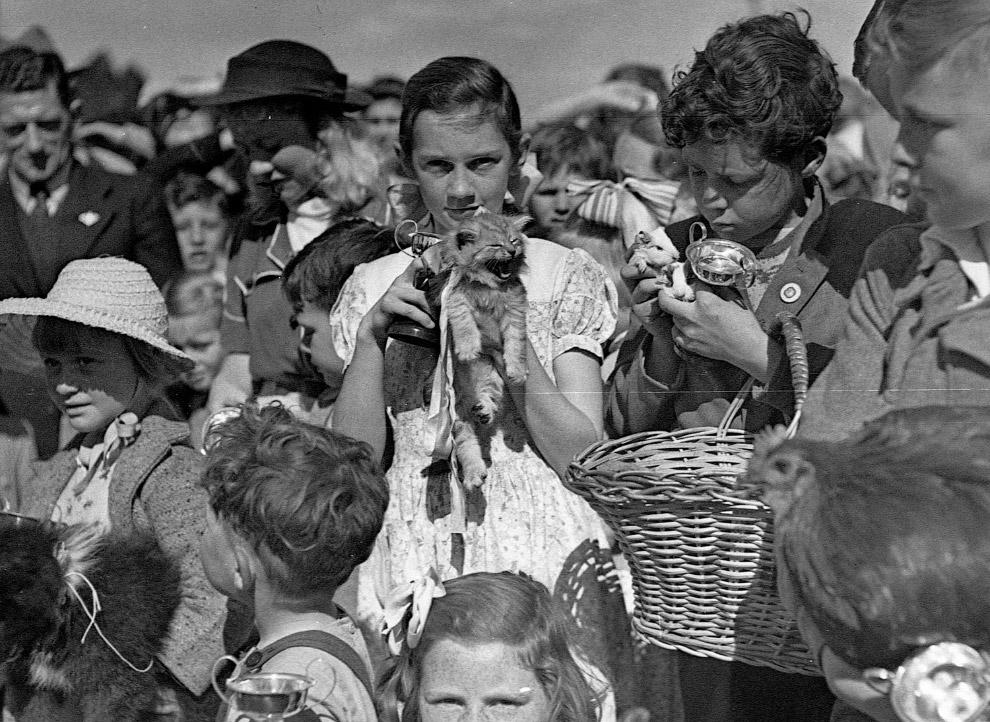 Парад домашних животных
