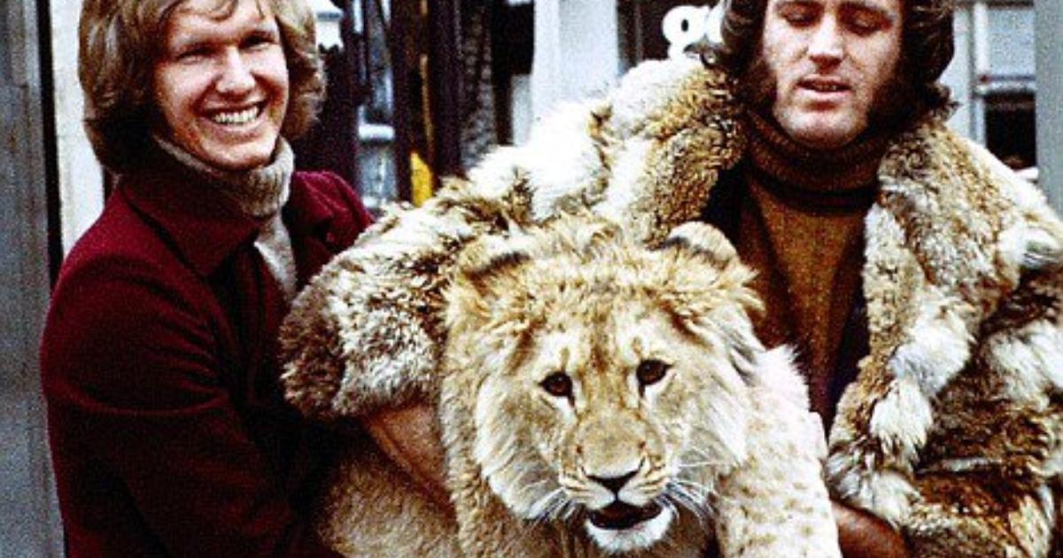 Друзья вырастили львенка, а потом отпустили… Спустя много лет лев вспомнил людей!