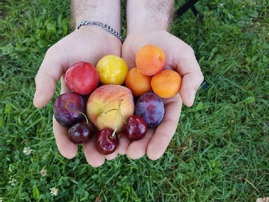 Самые опасные фрукты