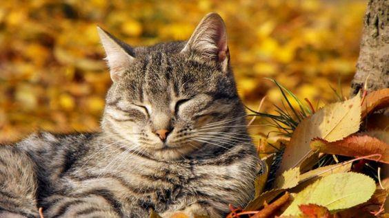 Будь здоров, малыш! Профилактика болезней у собак и кошек