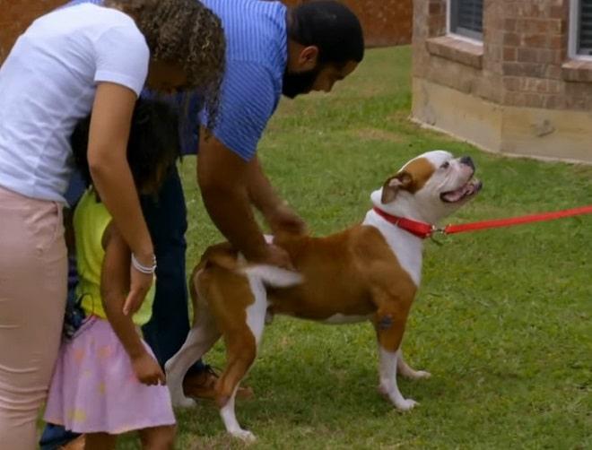 Семья и собака