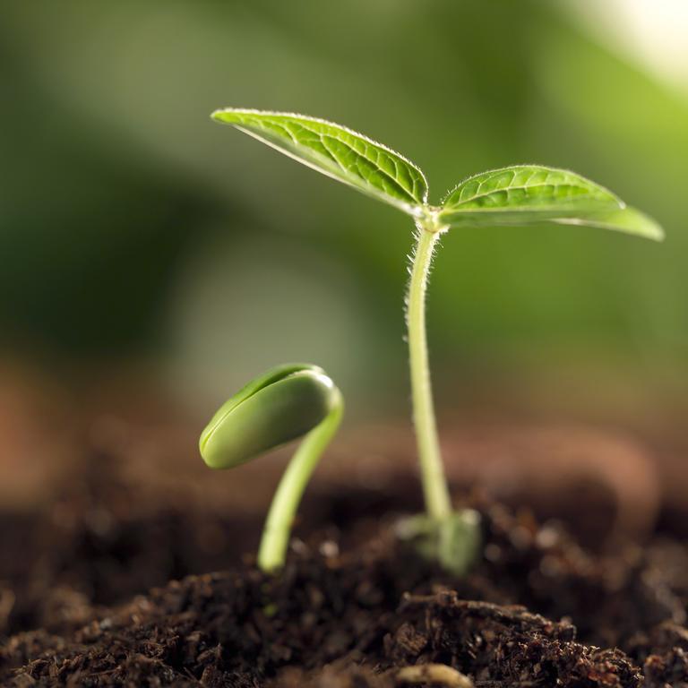 Купить ростки растений, цветов магазины свежесрезанные