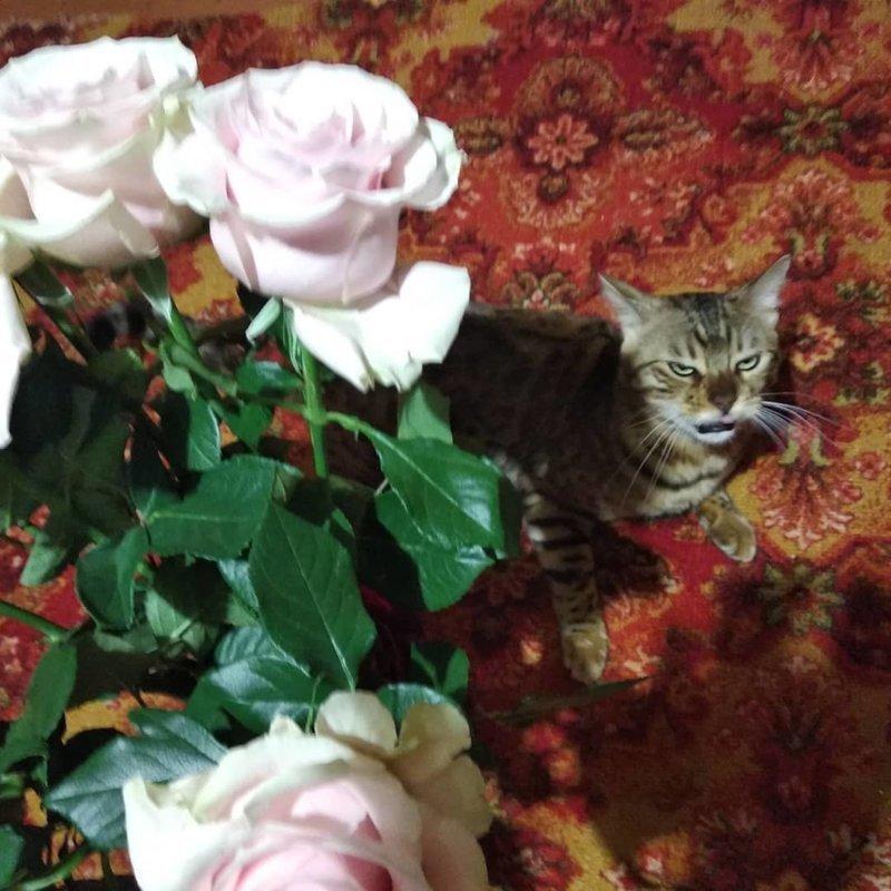 Опять эти цветы кот, коты, опасный кот, прикол, суровый