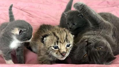 В Приморье кошка выходила детёныша рыси