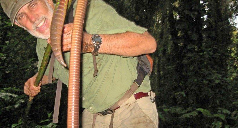 Три метра длиной: где обитают самые большие дождевые черви в мире