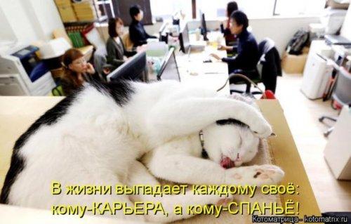 Новая котоматрица для настроения (36 фото)