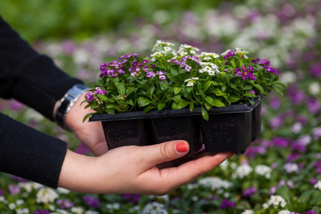 СУПЕР-СПОСОБ выращивание рассады и не только без полива